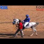 شيلة قسى لين العود,عبدالعزيز العليوي , شيلات خيل horse