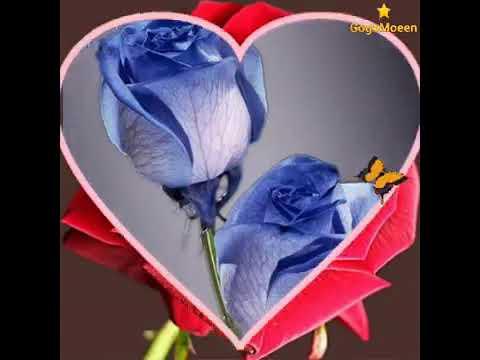 Mp3 تحميل حبيبي صباح الخير صباحك ورد وفل ولوز يهديلك صباح الورد