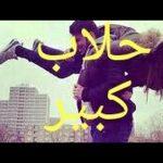 تفسر الأحلام مع شيخ سيد حمدى على قناة المحور