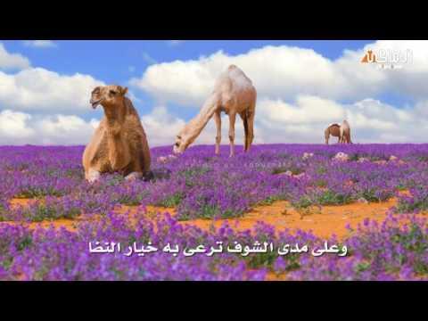 تحميل اغنية كلام العين بشار السرحان mp3